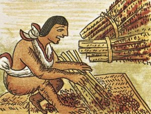maya.amaranto