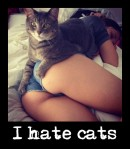 puto.gato.en.culamen copia