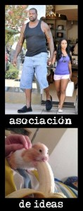 asociacion.ideas.hamster