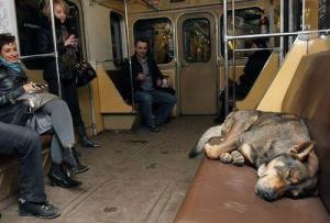 perro.moscu.roke.metro