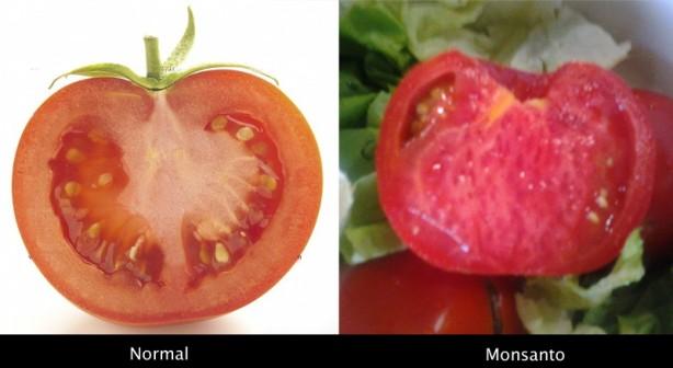 tomate.monsanto